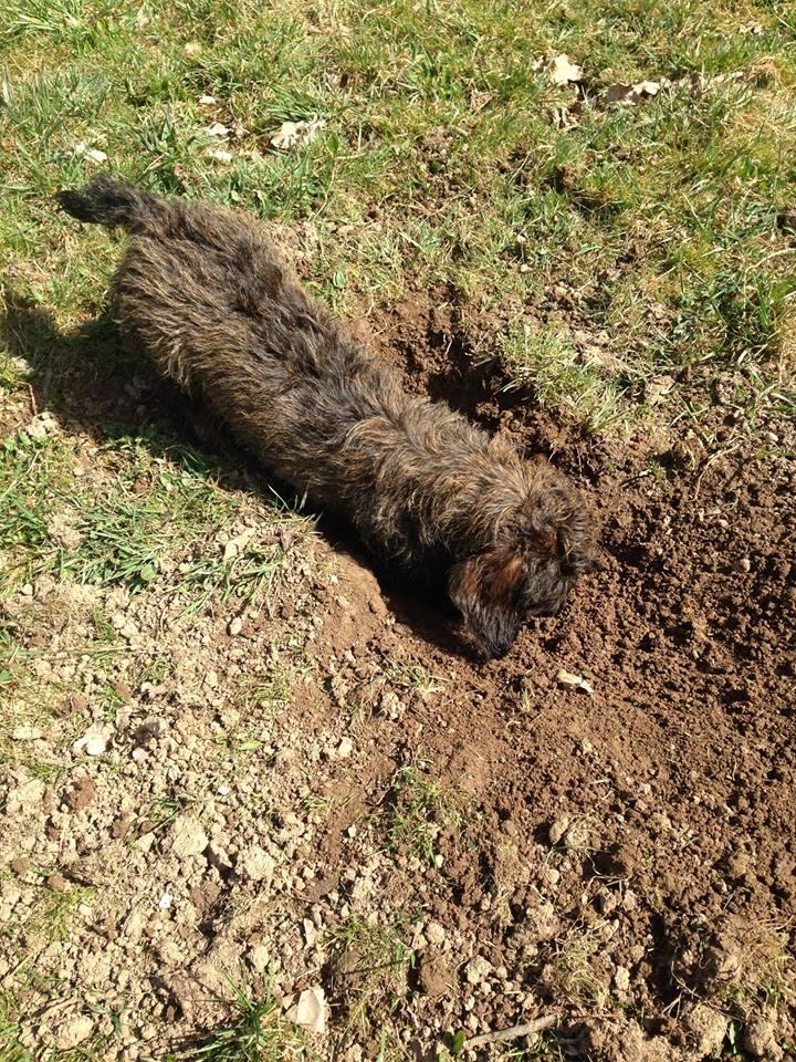 Čmeláci PLUS - Nenechávejte hrabat psy v norách