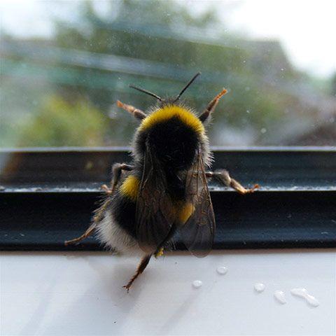 Čmeláci PLUS - Zachraňte mne když jsem uvízl za oknem!