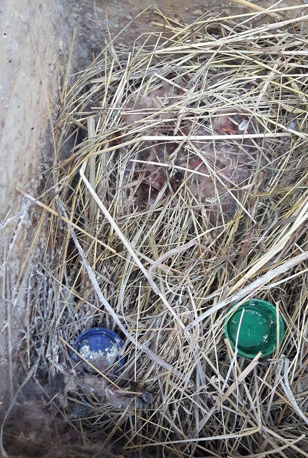 Čmeláci PLUS - Nevhodná výstelka z trávy podléhá snadno plísni
