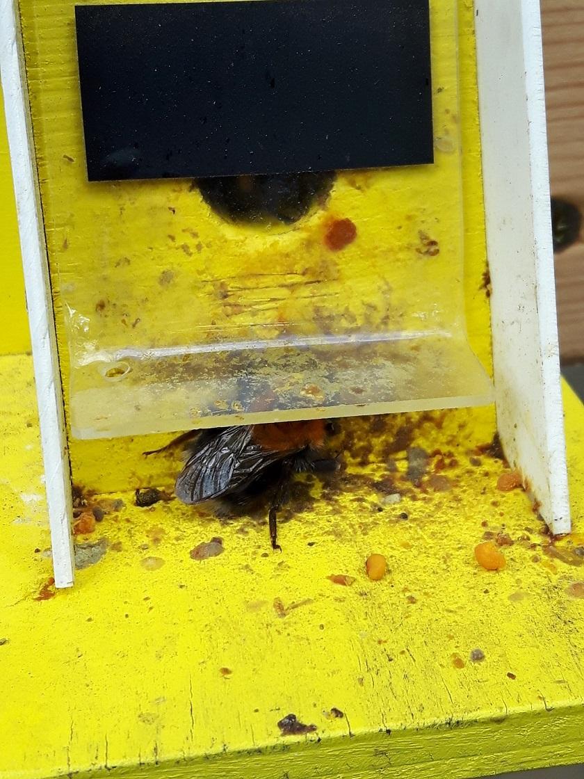 Čmeláci PLUS - Ochranná klapka zanesená pylovými rousky a voskem