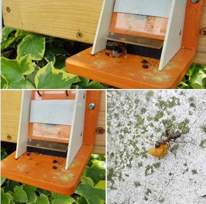 Čmeláci PLUS - Ochrana úlku proti mravencům - mravenci na česně