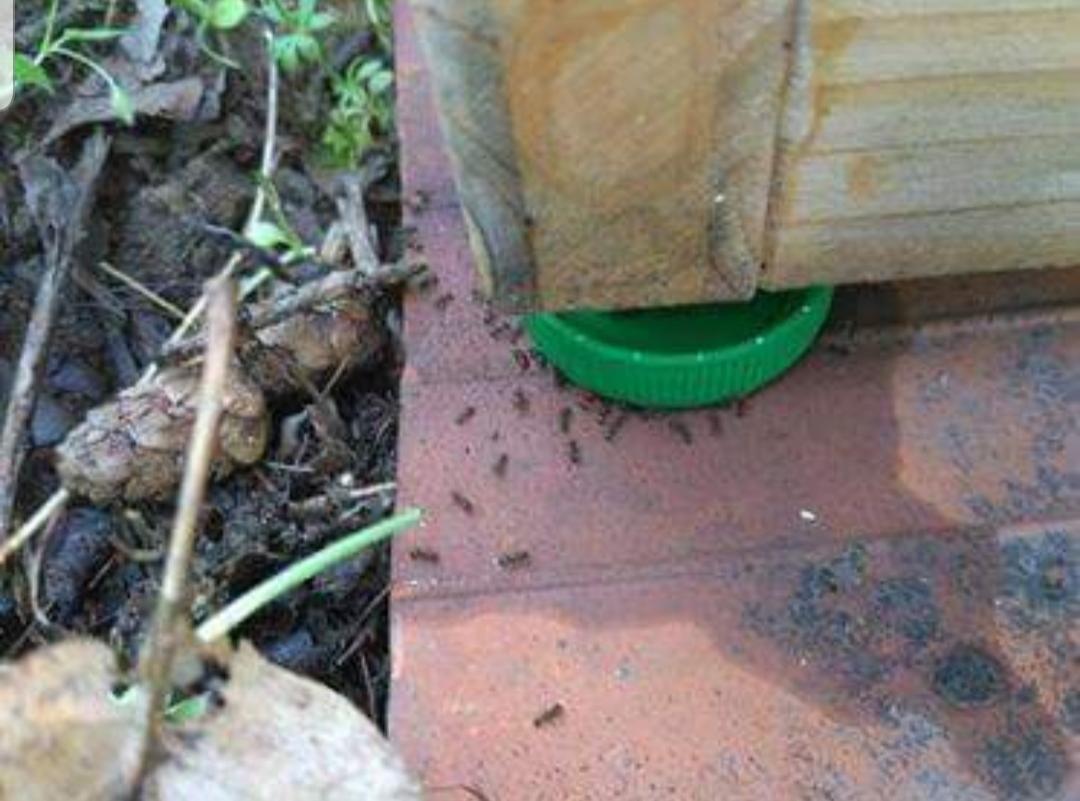 Čmeláci PLUS - Ochrana úlku proti mravencům - úlek na zemi - jedlý olej jako krmítko mravenců