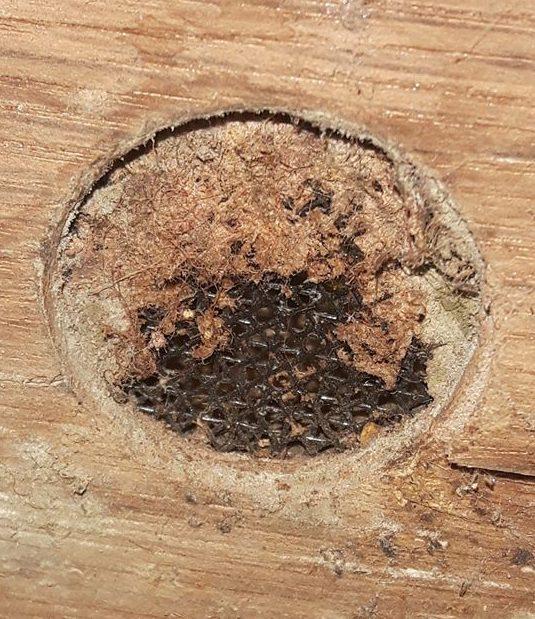 Čmeláci PLUS - Větrání úlku zalepené voskem