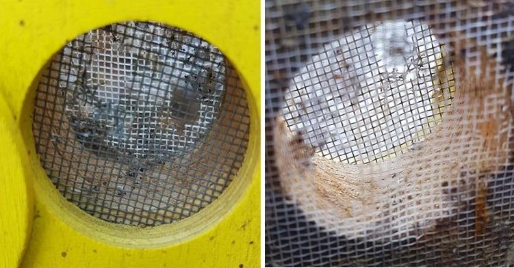 Čmeláci PLUS - Větrání ulku - čmeláky prokousaná síťka komerčně dostupného úlku