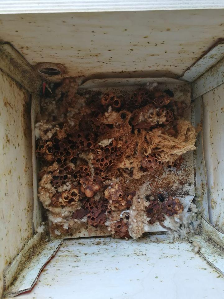 Čmeláci PLUS - Obložení stěn úlku kartonem - pokud karton nepoužijete, čištění po sezóně bude náročnější
