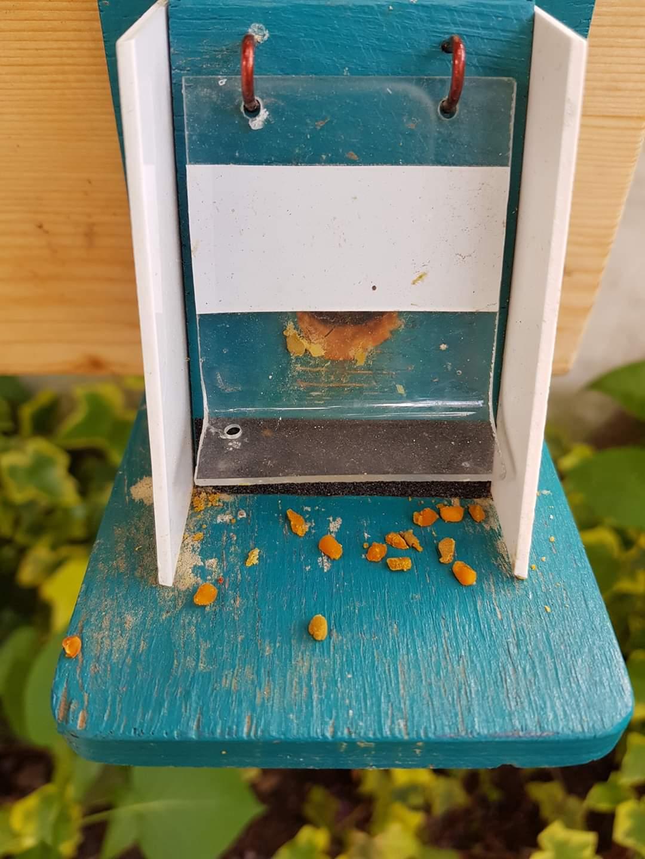 Čmeláci PLUS -_Poztrácené pylové rousky na česně úlku