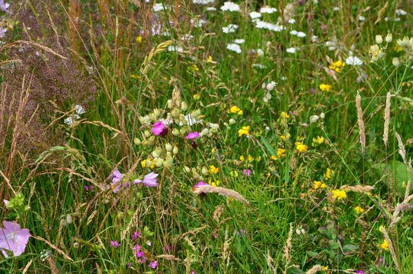 Česká květnice louka Planta naturalis