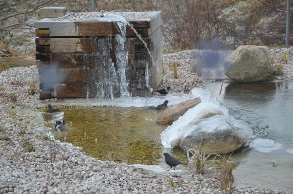 Přirodní vodní plocha v zimě