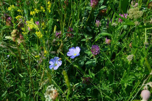 Květnatá louka jako hmyzí pastva