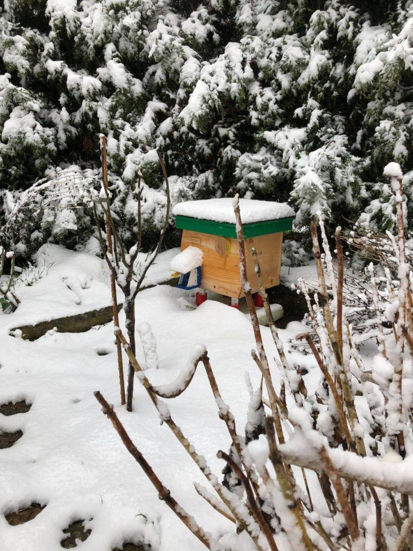 Čmeláci PLUS - Úlek na zasněžené zahradě