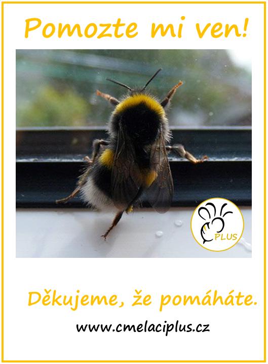 Čmeláci PLUS - Pomáháme čmelákům i přírodě - Čmeláci PLUS - Leták malý