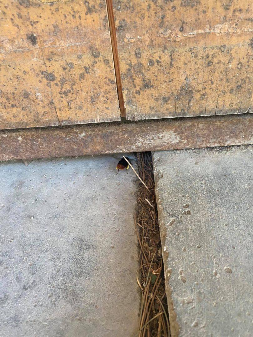 Čmeláci PLUS - Čmelák skalní v garáži