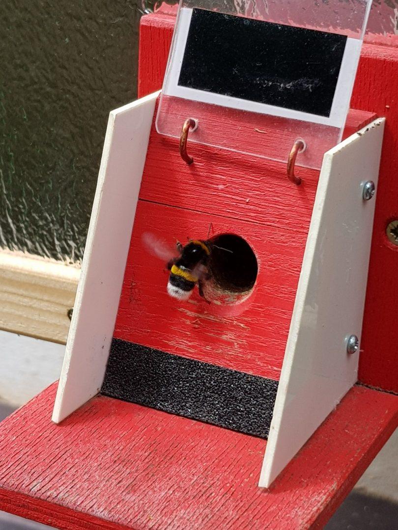 Čmeláci PLUS - Evakuace hnízda - druhý  den - první dělnice se objevují a dělají orientační let