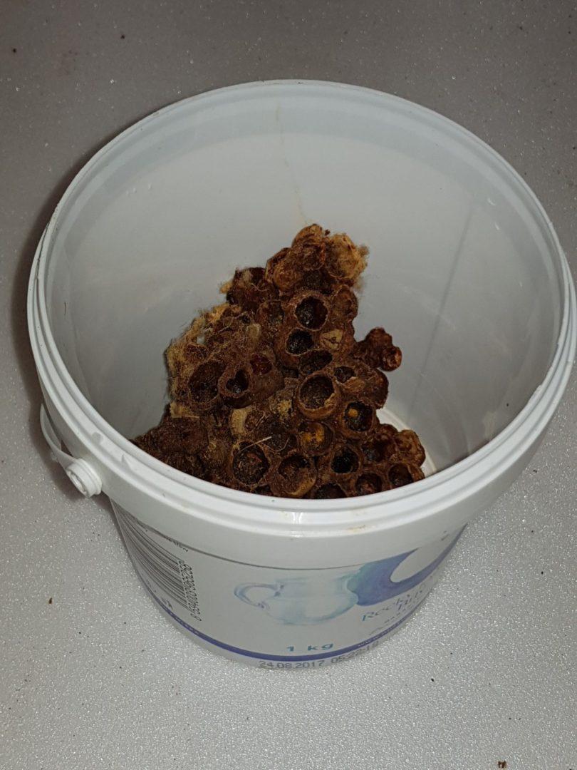 Čmeláci PLUS - Část hnízda uloženého na ukázku
