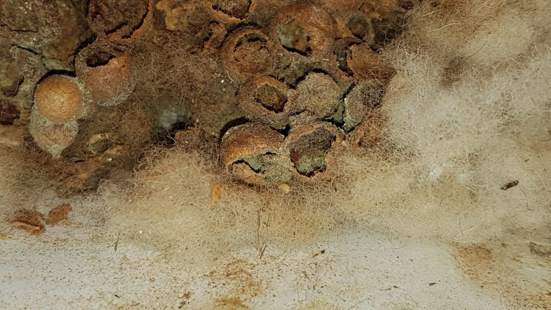 Čmeláci PLUS - Odkrýváme hnízdo