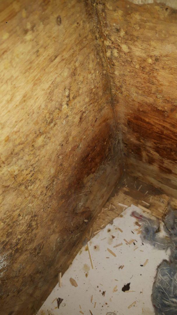 Čmeláci PLUS - Vlhkost poškozuje dřevěné části úlku