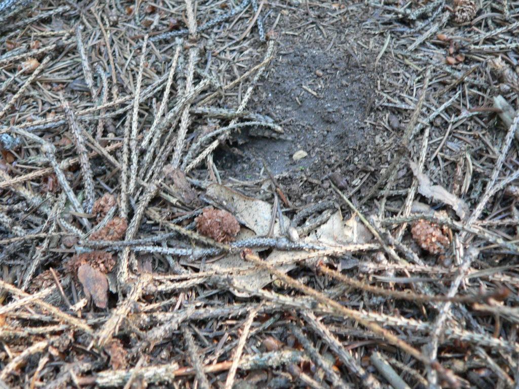 Zimoviště čmeláka skalního