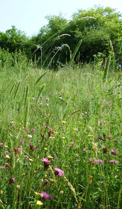 Čmeláci PLUS - Kvetoucí louka - Biodiverzita zs