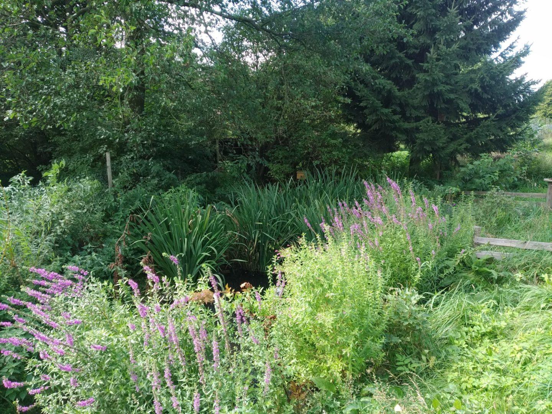 Čmeláci PLUS - Vaše zahrada