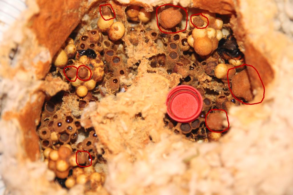 Čmeláci PLUS - Obrázek hnízda s vybranými částmi které lze použít - Foto Jakub Černý 6_2020